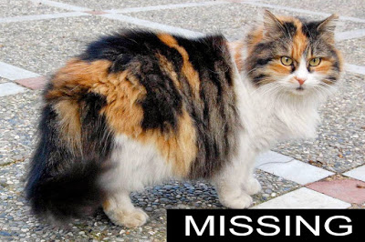 Talking With Missing Animals – ALL Can Do This!