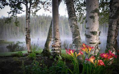"Inktense Fabric Painting Webinar – ""A Peaceful Landscape"""